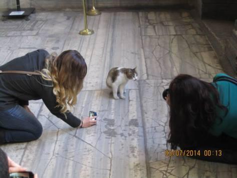 mosque cat